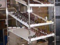 Chocolate display cabinet